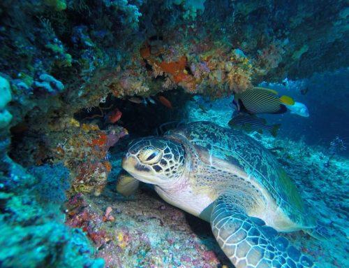 Maldives is still the most popular diving destination