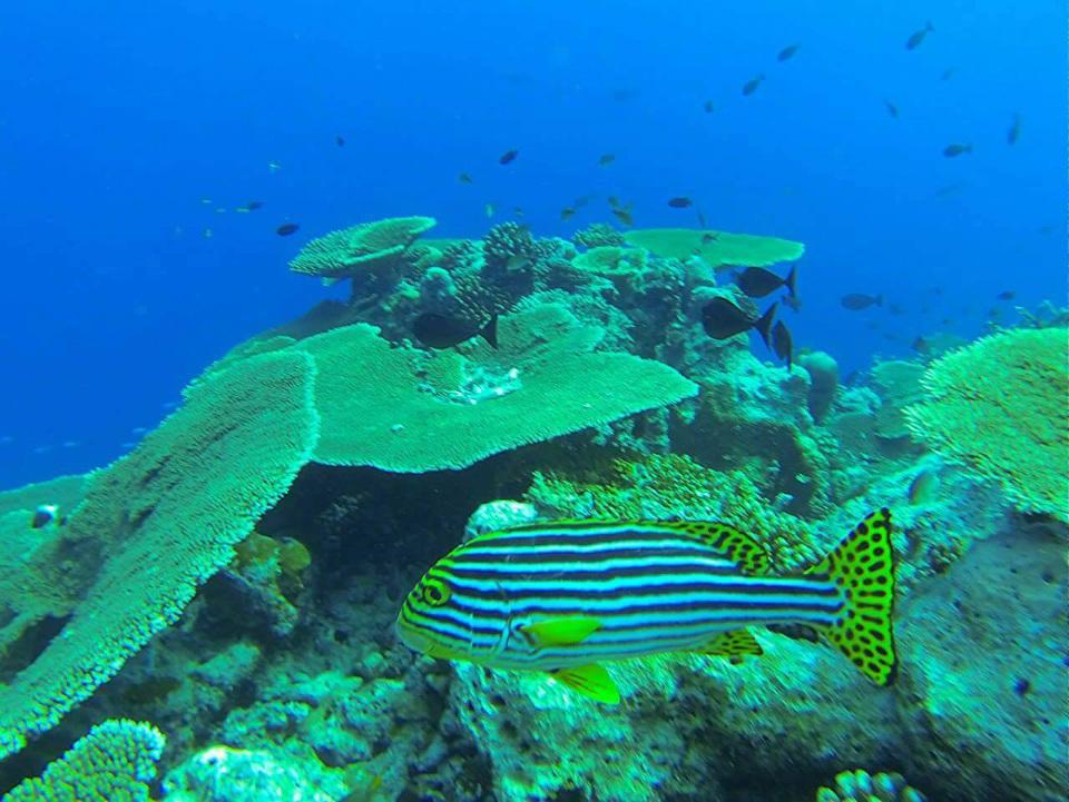 Snorkeling on Reef Huraa North Male Atoll – BEACH HEAVEN MALDIVES