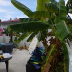 Surfing Huraa Guest House